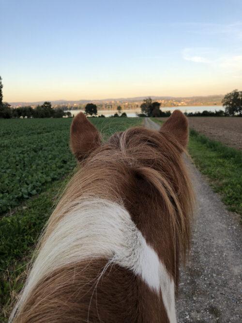 Unterwegs mit Pferd